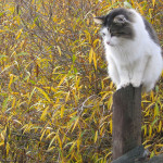cat on fence post